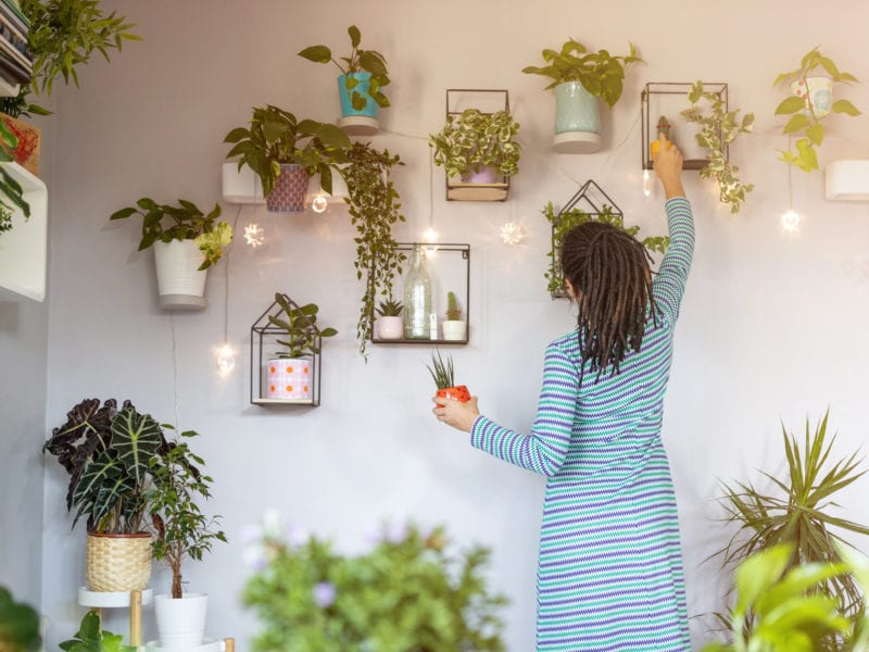 These Easy Tips Will Help Your Houseplants Thrive