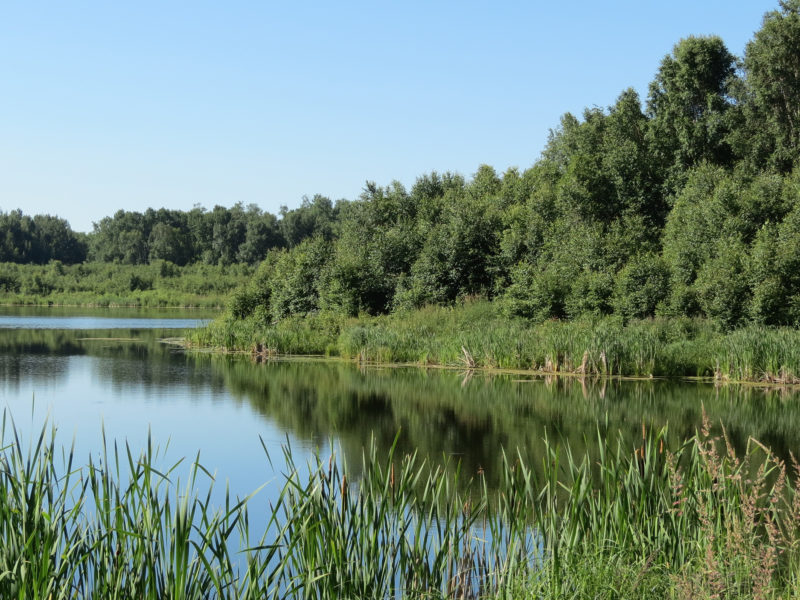 Embrace Your Backyard by Exploring These Conservation Areas Near Edmonton