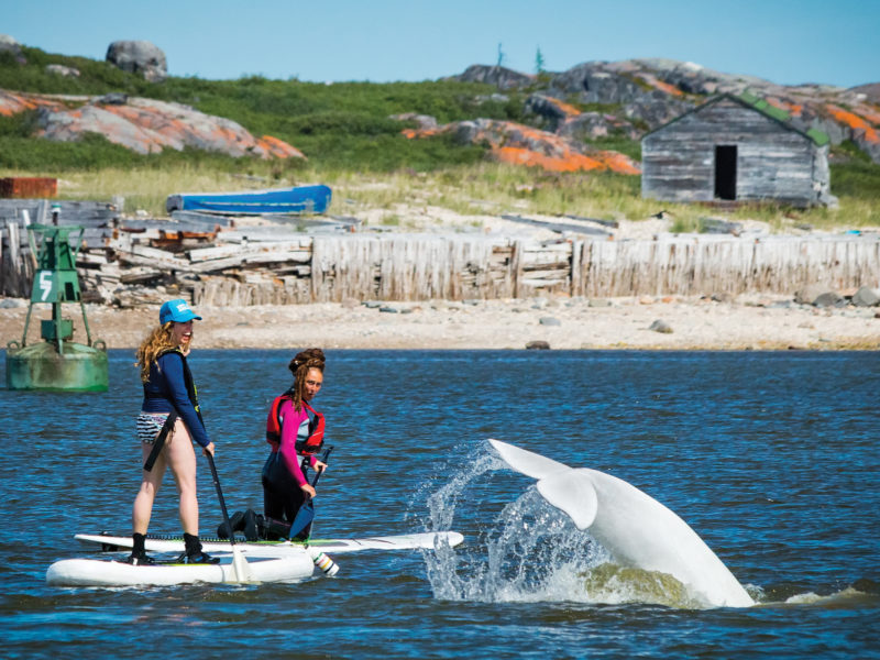 Things to Do in Summer in Churchill, Manitoba